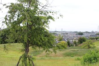 ドレミの丘公園から見える景色#385722