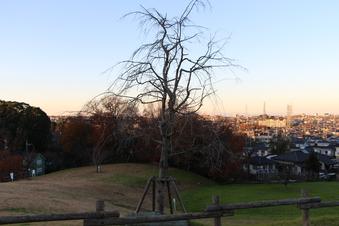 ドレミの丘公園から見える景色#385717