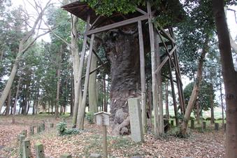 中氷川神社の大木#385948