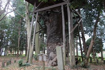 中氷川神社の大木#385949