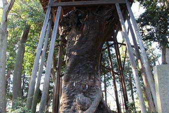 中氷川神社の大木#385950