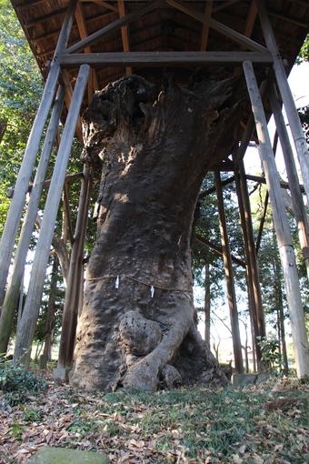 中氷川神社の大木#385951