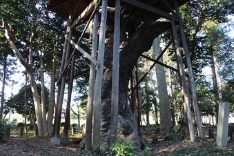 中氷川神社の大木#385952