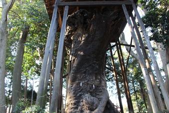 中氷川神社の大木#385953