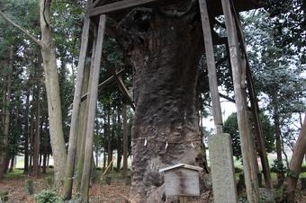 中氷川神社の大木