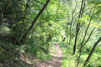 さいたま緑の森博物館#386064
