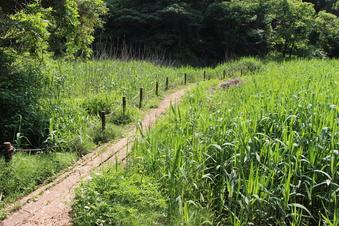 さいたま緑の森博物館#386065