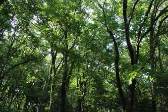 さいたま緑の森博物館#386068