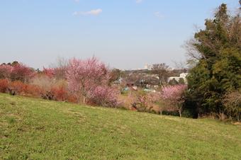 比良の丘の春