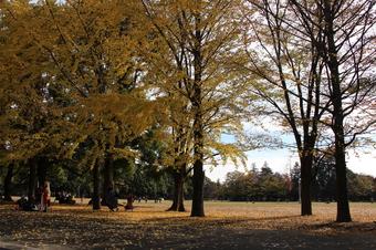 航空記念公園の紅葉