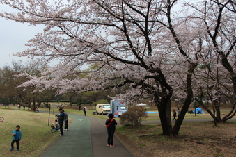 航空公園の桜#386899