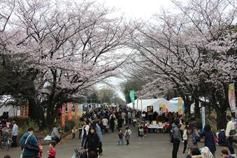 航空公園の桜#386909