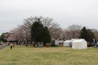 航空公園の桜#386911