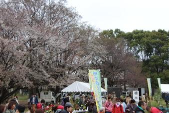 航空公園の桜#386913