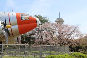 航空公園の桜#386917