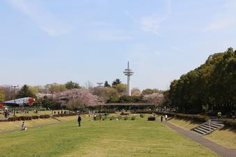 航空公園の桜#386919