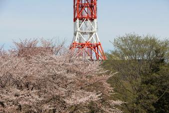 航空公園の桜#386920