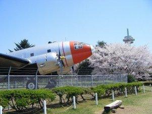 航空公園の桜#386921