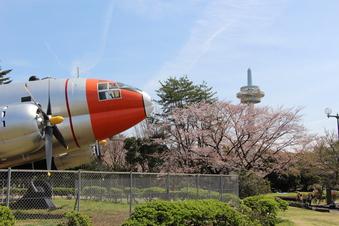航空公園の桜#386922