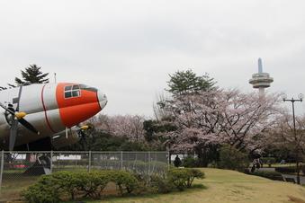航空公園の桜#386923