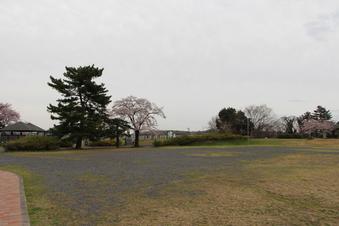 狭山湖周辺の桜#386925