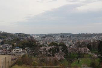 狭山湖周辺の桜#386928