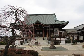 全徳寺の梅#387321