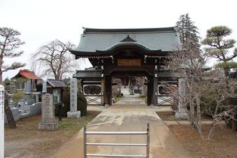 全徳寺の梅#387300