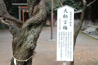 北野天神社の梅#387335
