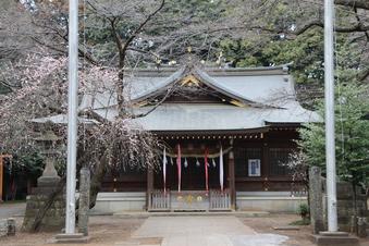 北野天神社の梅#387329