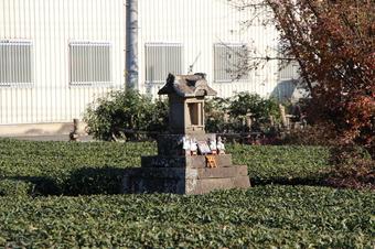 茶畑の中心に祠