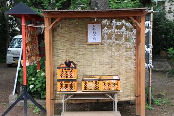 所澤神明社の人形供養祭#389053